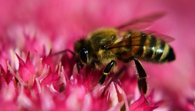 bionature al veleno d'api