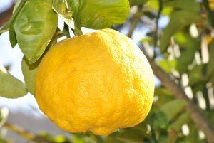 acqua e limone dimagrire